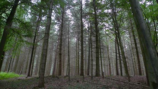 Reichswald-groot-statig