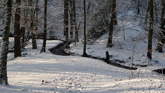 St-Jansberg-Meanderende-beekjes